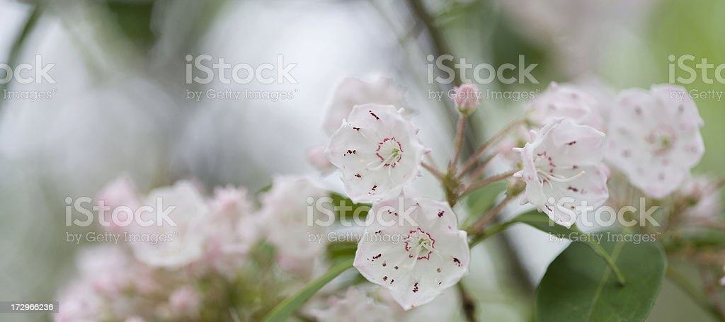Soft and Soothing stock photo