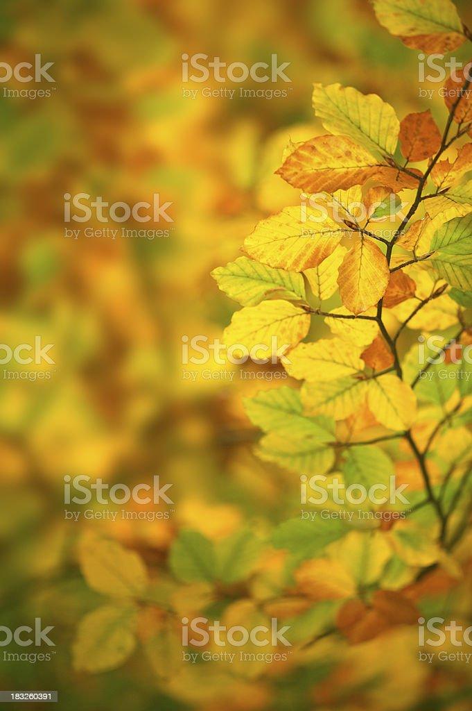soft Autumn colours stock photo
