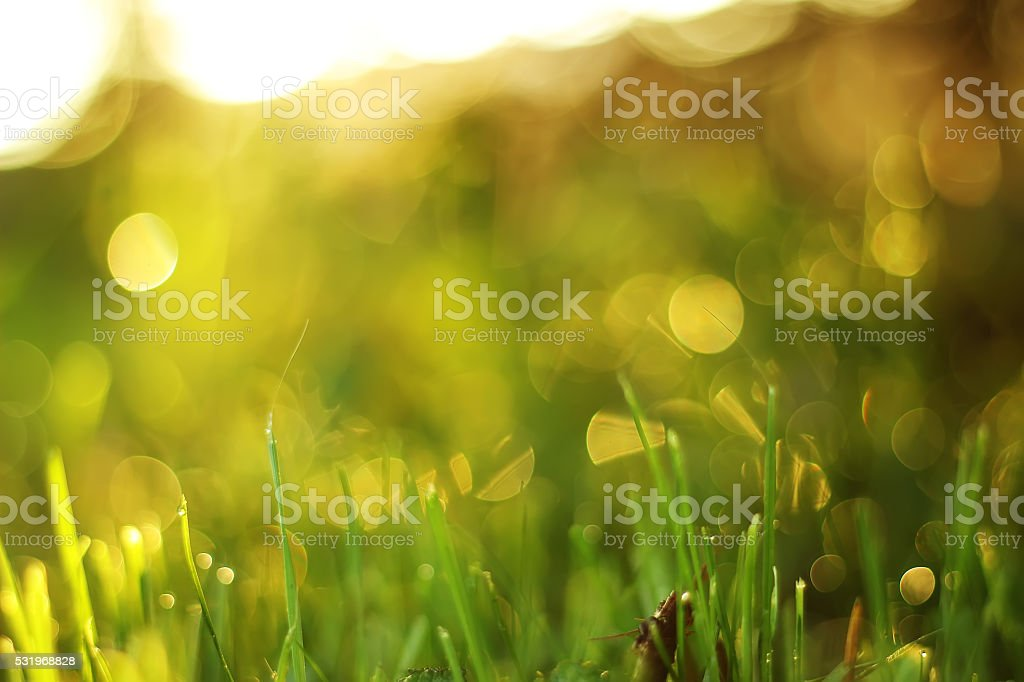 soft blur green grass background royalty-free stock photo