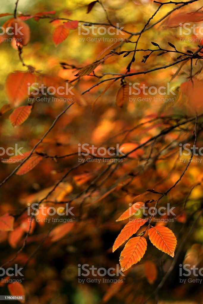 Soft branches stock photo