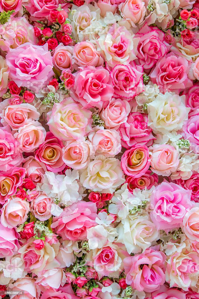 Soft color Roses background stock photo