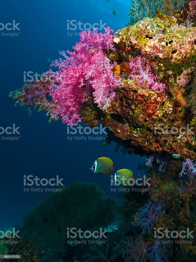 Soft Coral and fish royalty-free stock photo