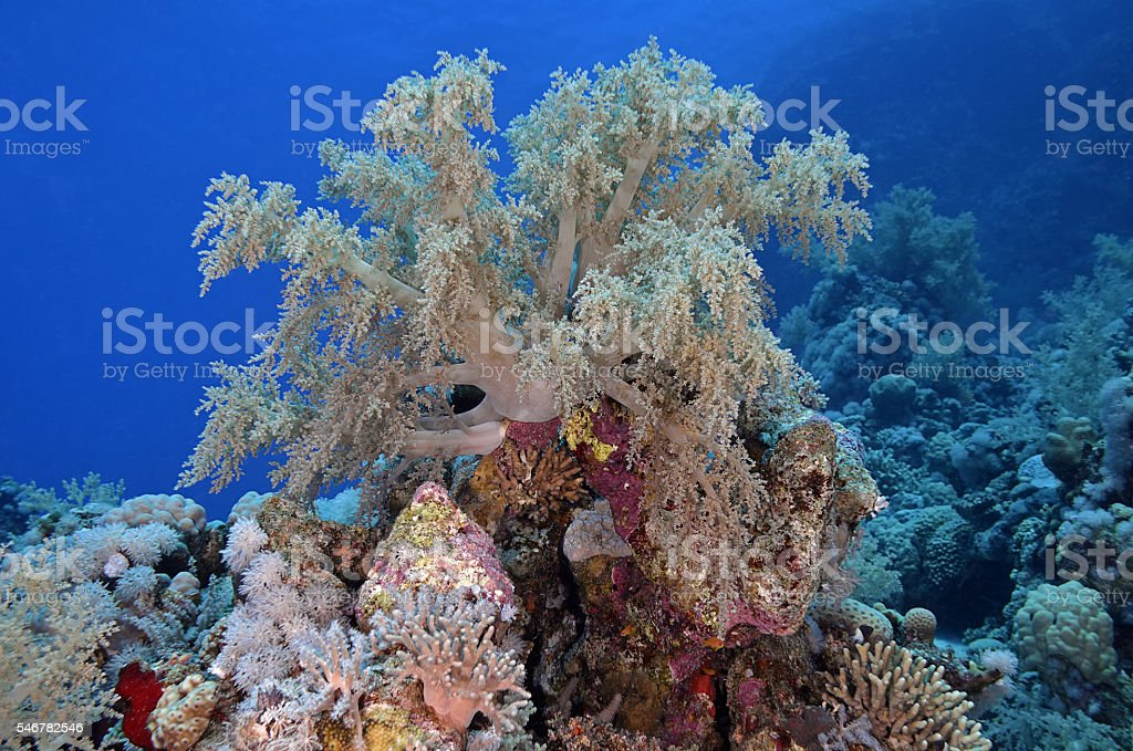 soft coral formation stock photo