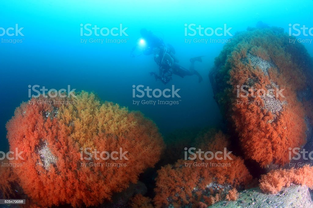 soft coral in Hong Kong stock photo