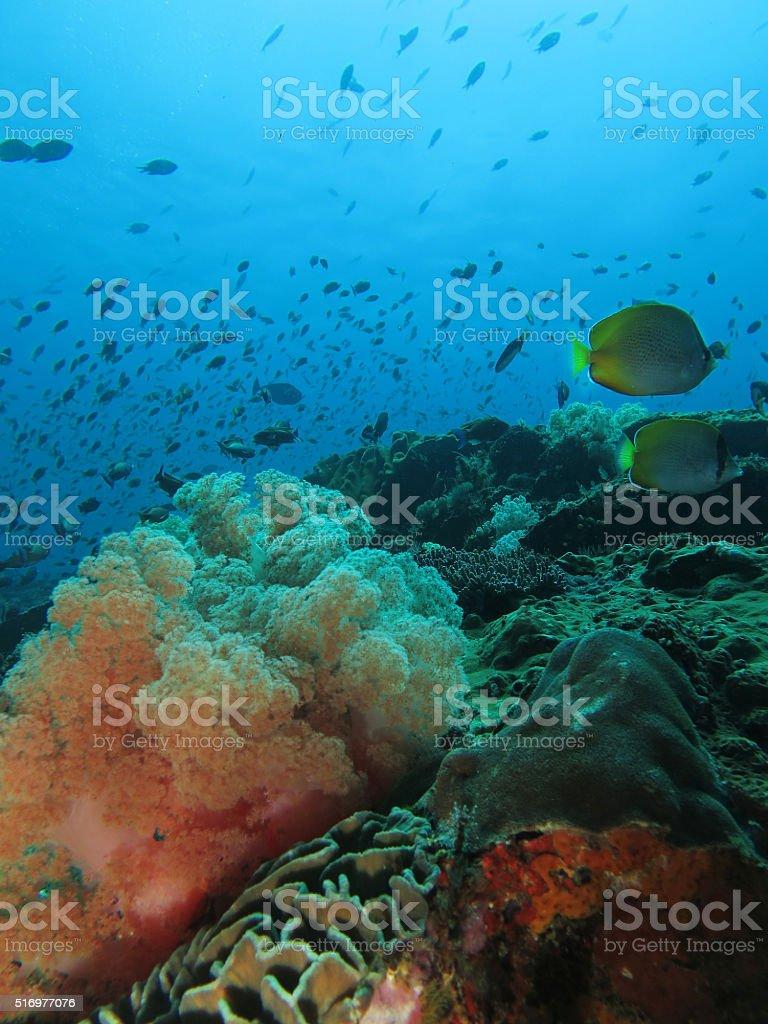 Soft coral reef scene stock photo