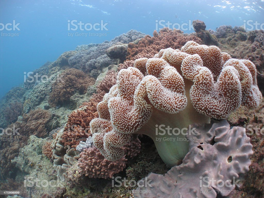 Soft Coral Reefscape 1 royalty-free stock photo