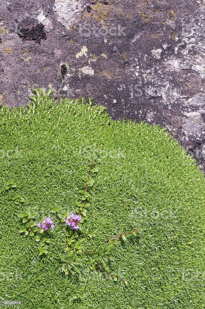 Soft cushion of moss stock photo