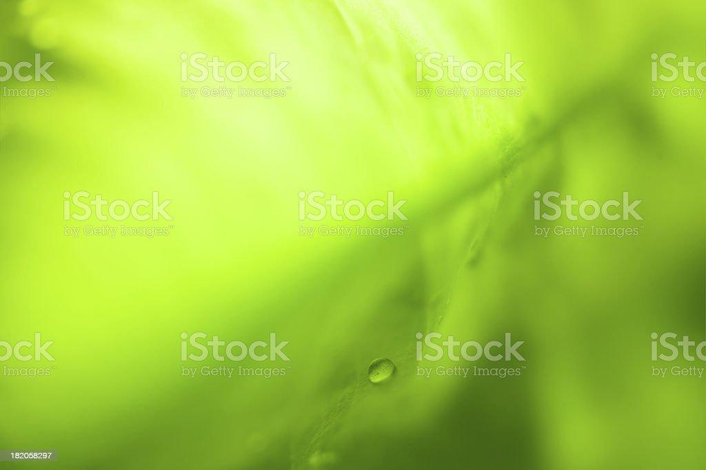 Soft Defocused Fresh Green Background with Rain Drops XXXL stock photo
