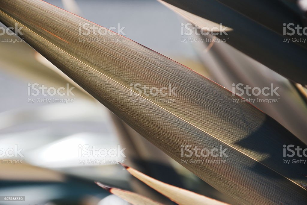 Soft Dreamy Harakeke (New Zealand Flax) Nature Background stock photo