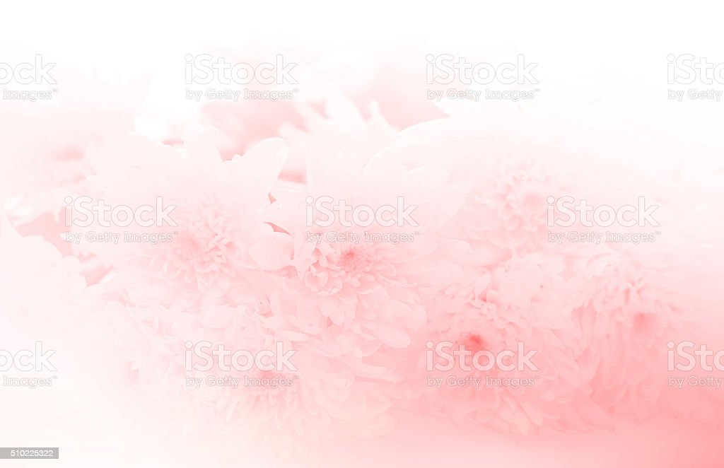 soft flower blossom background stock photo