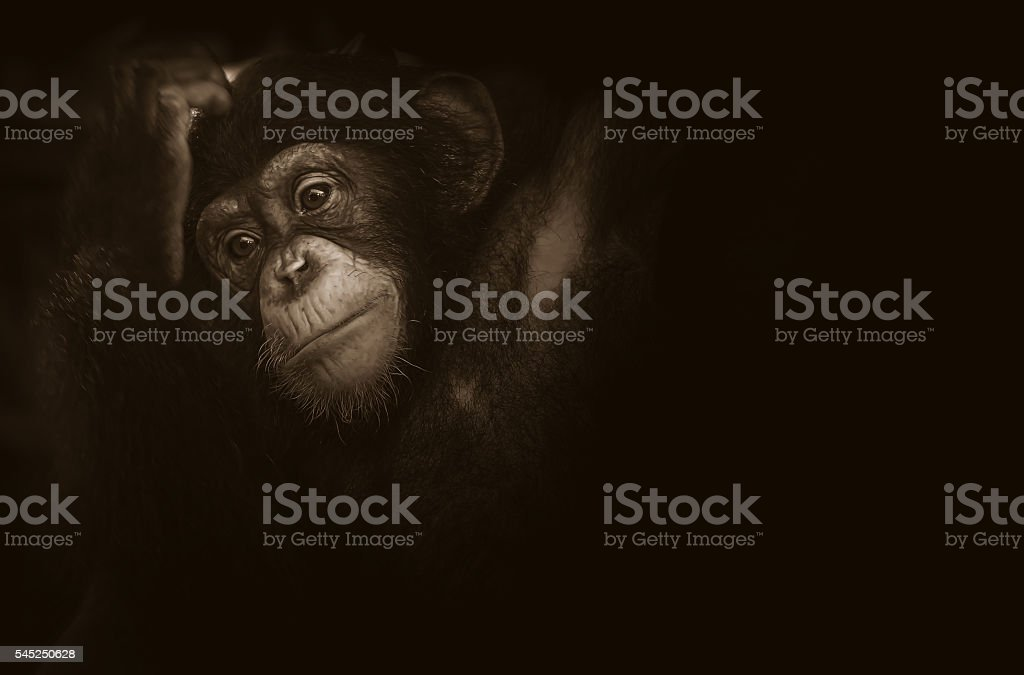 Soft focus baby monkey feel lonesome on black background stock photo