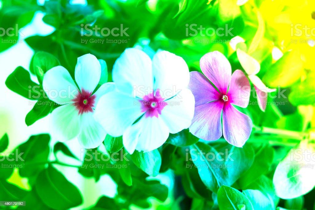 doux accent fleur magnifique arrièreplan en avec filtres de