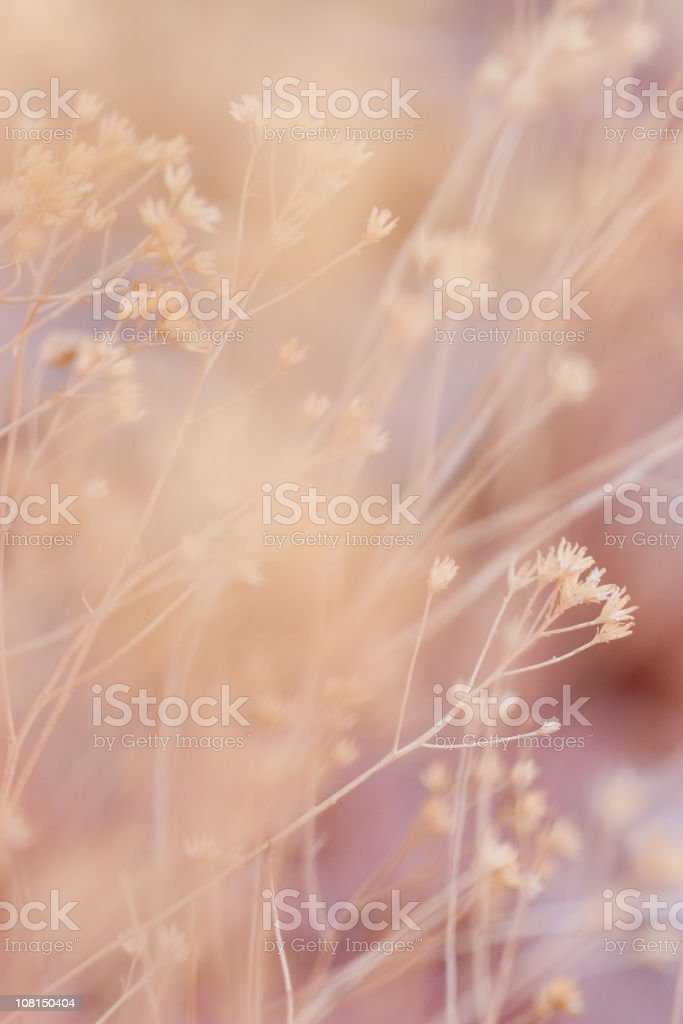 Soft Focus of Desert Plants royalty-free stock photo