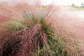 Soft focus pastel ornamental grass nature background