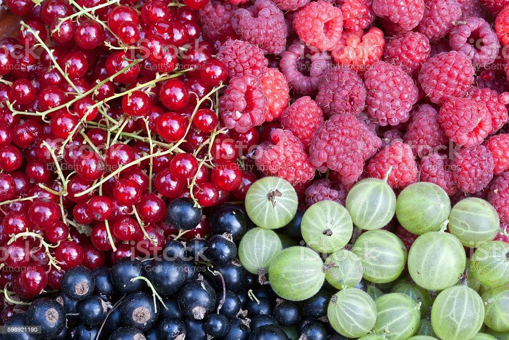 Soft fruit harvest stock photo