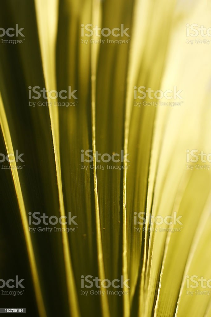 Soft green background royalty-free stock photo