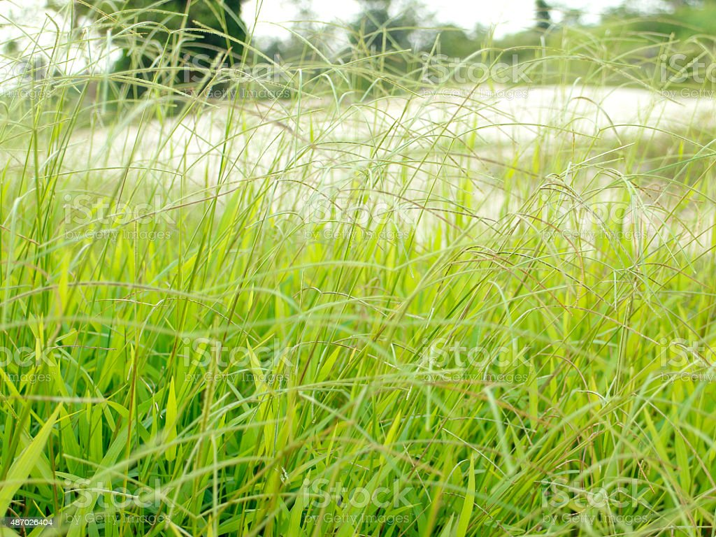 soft green grass royalty-free stock photo