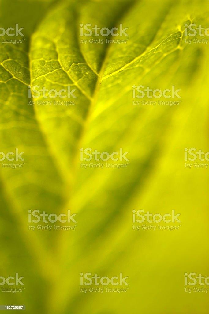 Soft green leaf royalty-free stock photo
