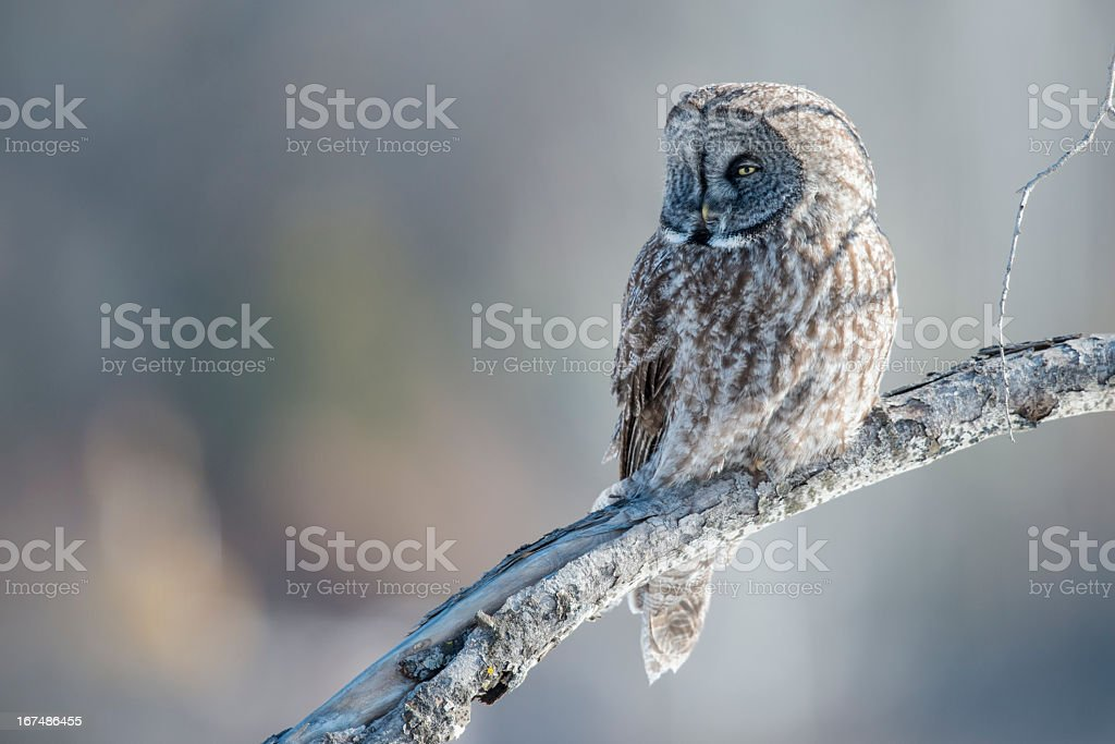 Soft Light Perch royalty-free stock photo