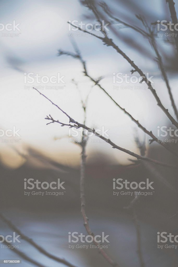 Soft moody nature scenic with bare tree branches at dusk stock photo