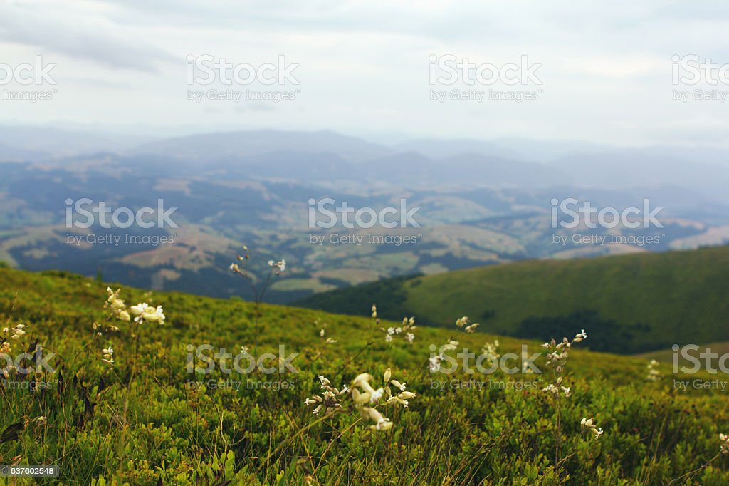 soft mountain landscape stock photo