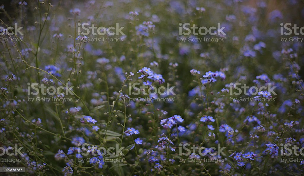 Soft Nature Background stock photo