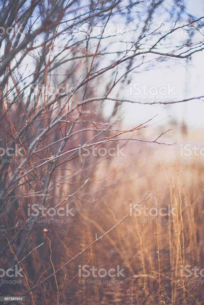 Soft painterly nature scenic with bare tree branches and grasses stock photo