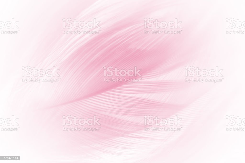 soft pink vintage color trends chicken feather texture background stock photo