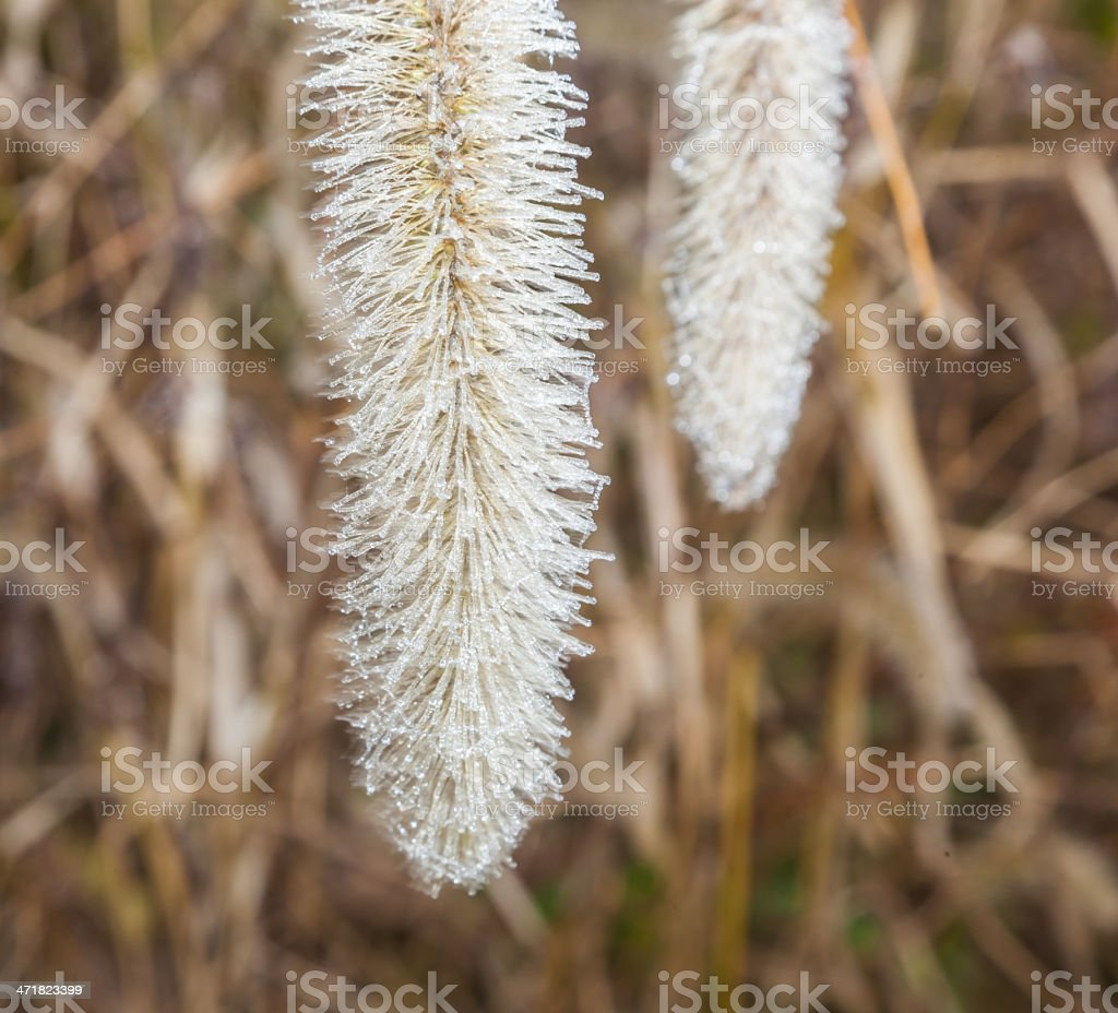 soft rime in the grass royalty-free stock photo
