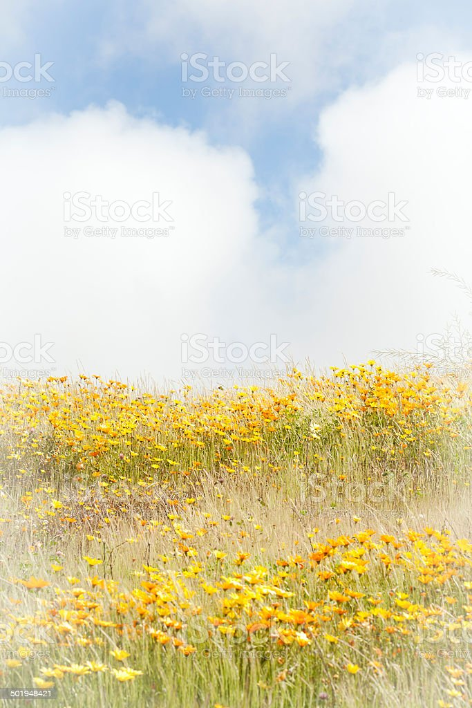 Soft Summer Day stock photo