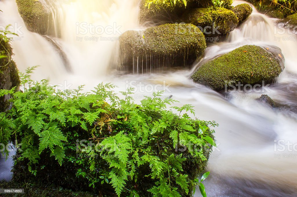 soft waterfall with green plant  on the rock rainy season stock photo