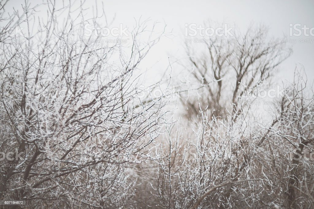 Soft winter scenic of bare trees and grasses in snow stock photo