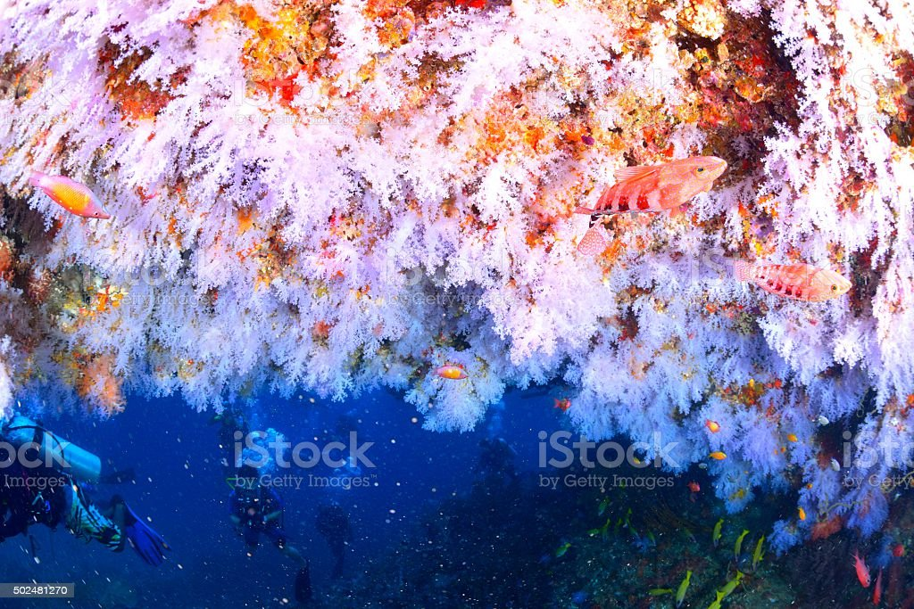 softcoral e mergulhador foto de stock royalty-free