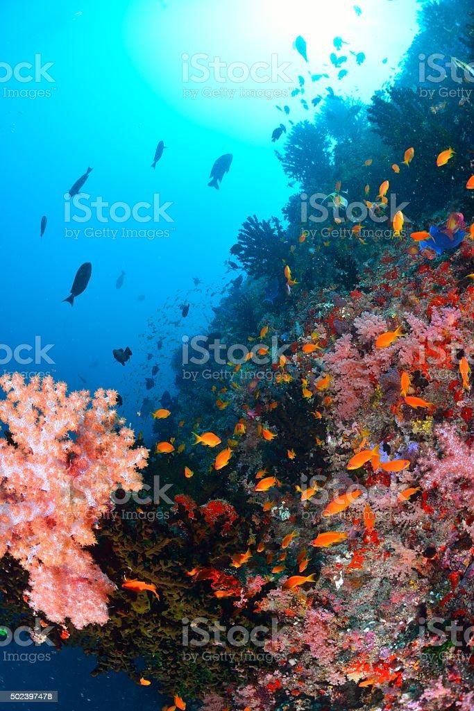softcoral e peixe foto de stock royalty-free