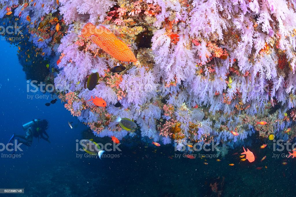 Softcoral e peixe foto de stock royalty-free