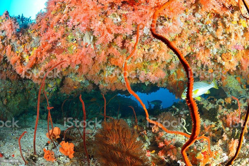 softcoral e peixes foto de stock royalty-free