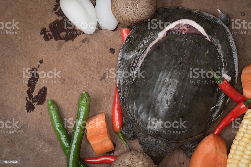 soft-shelled turtle stock photo