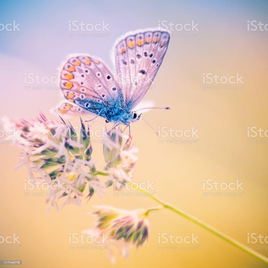 Soft-tone image of a butterfly standing on edge of a plant stock photo