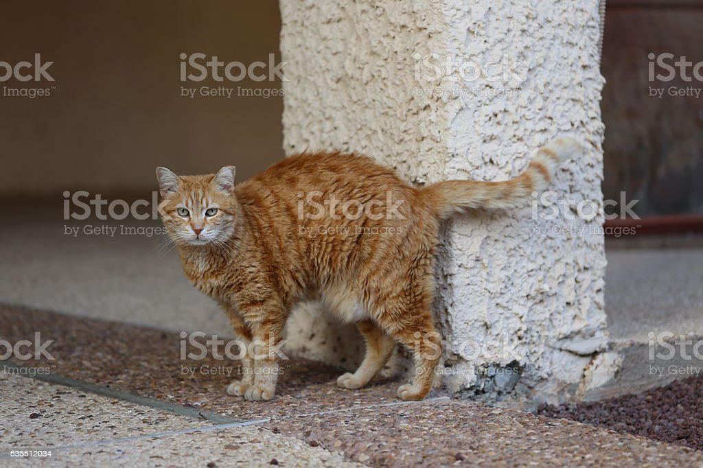 Soigne Cat. stock photo