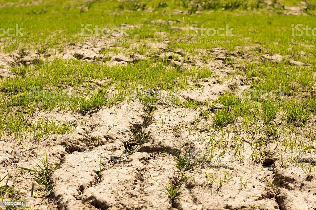 soil and grass during drought stock photo