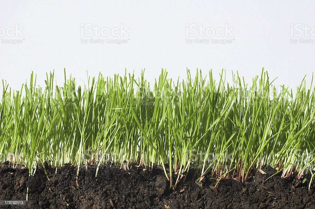 soil and grass royalty-free stock photo