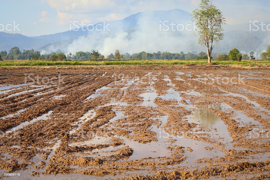 Soil background blue sky cloud cloudy water rice Wetlands stock photo