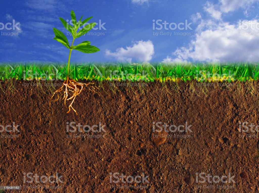 Soil Cross Section stock photo
