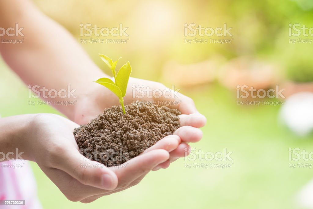 Soil cultivated earth, ground, agriculture Field land background, Organic gardening, agriculture. Hand holding seedling in new life concept. stock photo