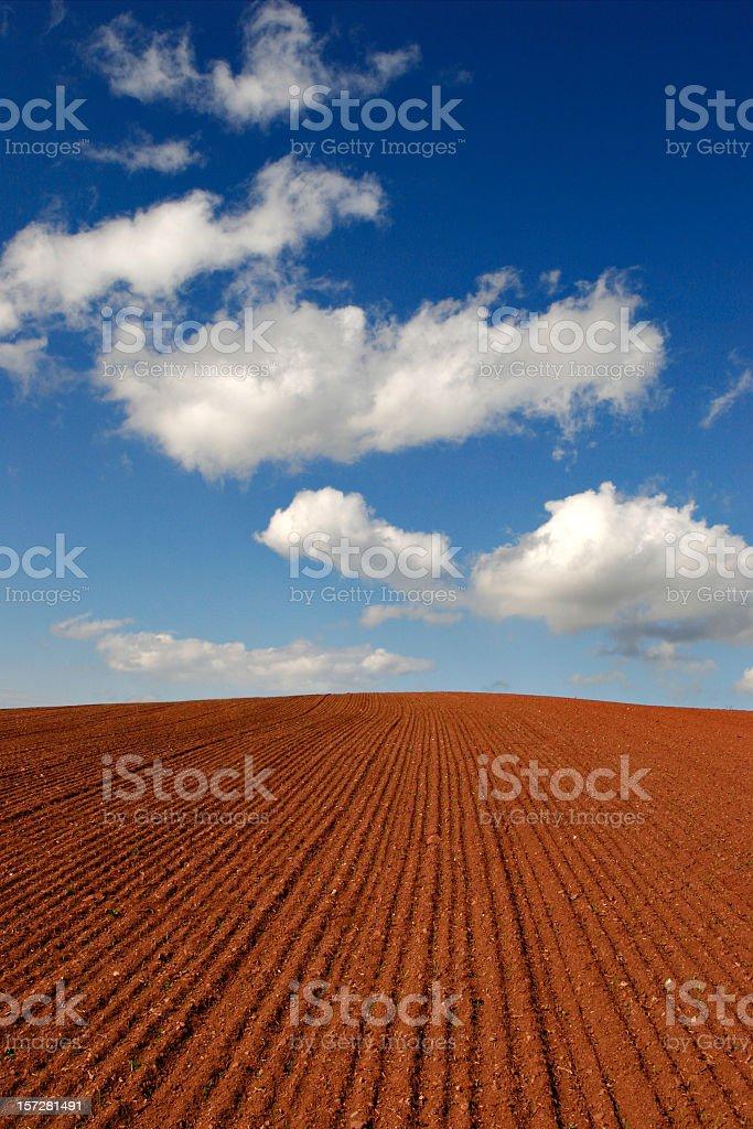 Soil II royalty-free stock photo