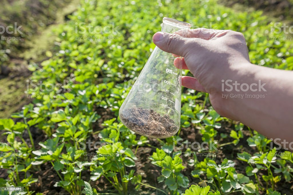 soil in the flask royalty-free stock photo