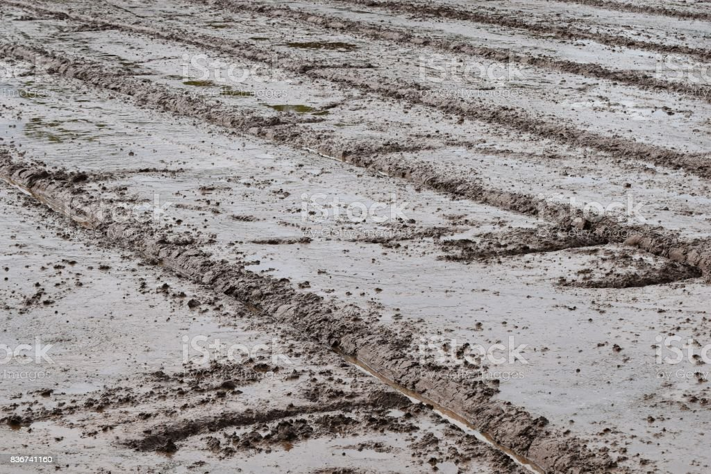 soil mud in rice field prepare for plant rice in agriculture stock photo