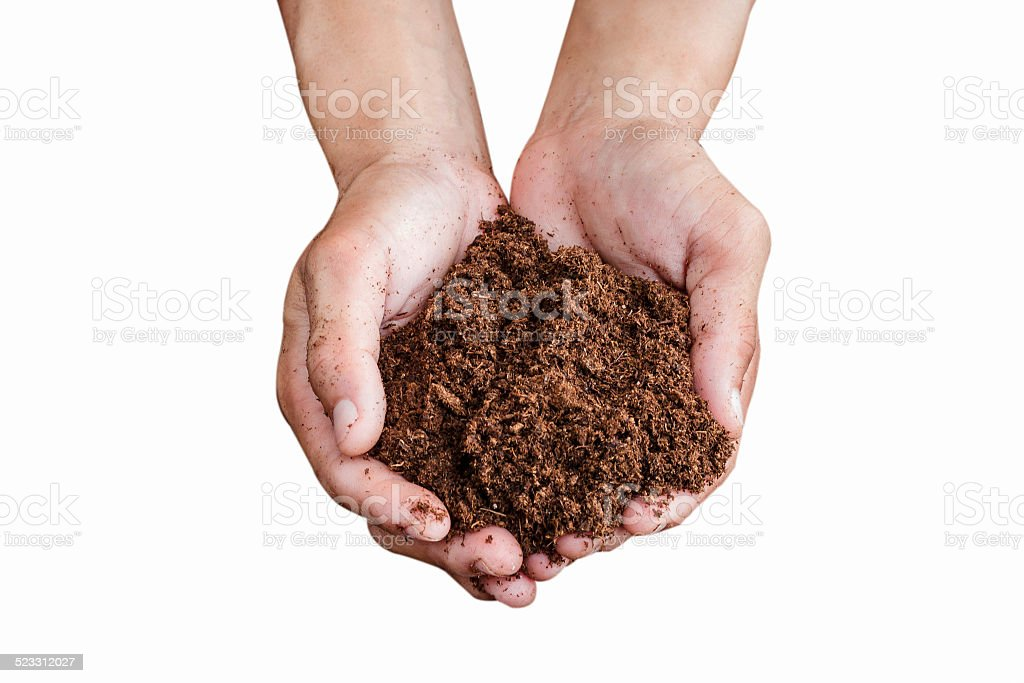 soil paet moss on hand isolated white background stock photo