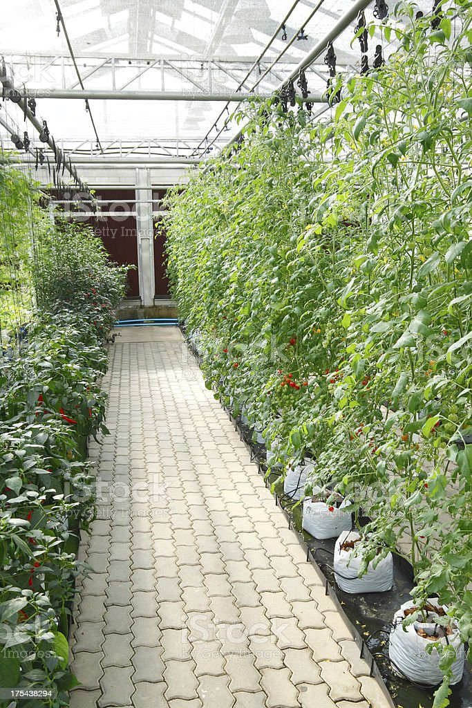 Soilless culture greenhouse stock photo