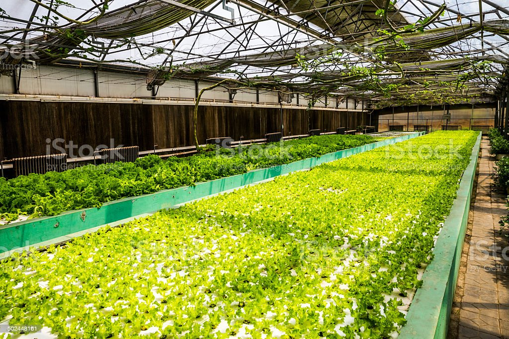 Soilless culture of plants stock photo